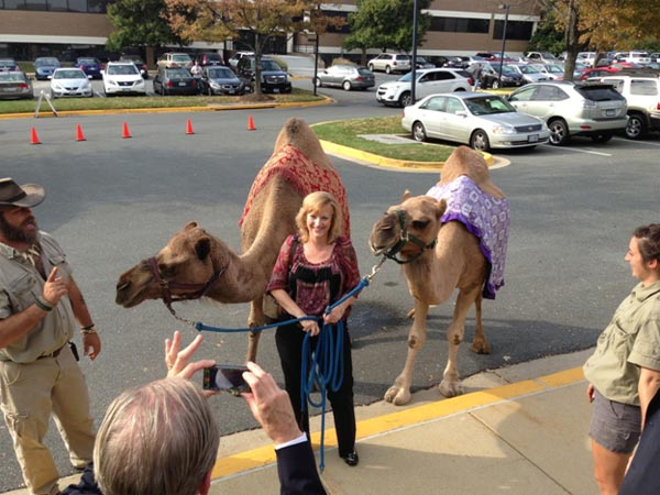 special-events-camel