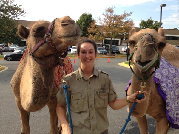 special-events-camels
